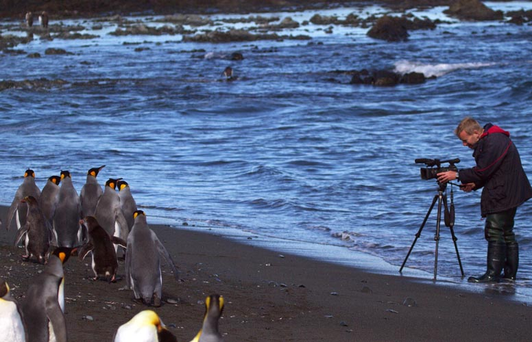 Damon Ramsey filming penguins for Ecosystem Guides documentaries