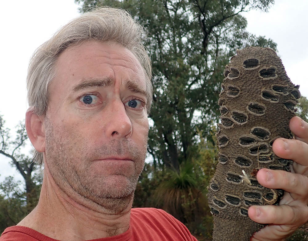Damon Ramsey with large fruiting cone of Banksia grandis