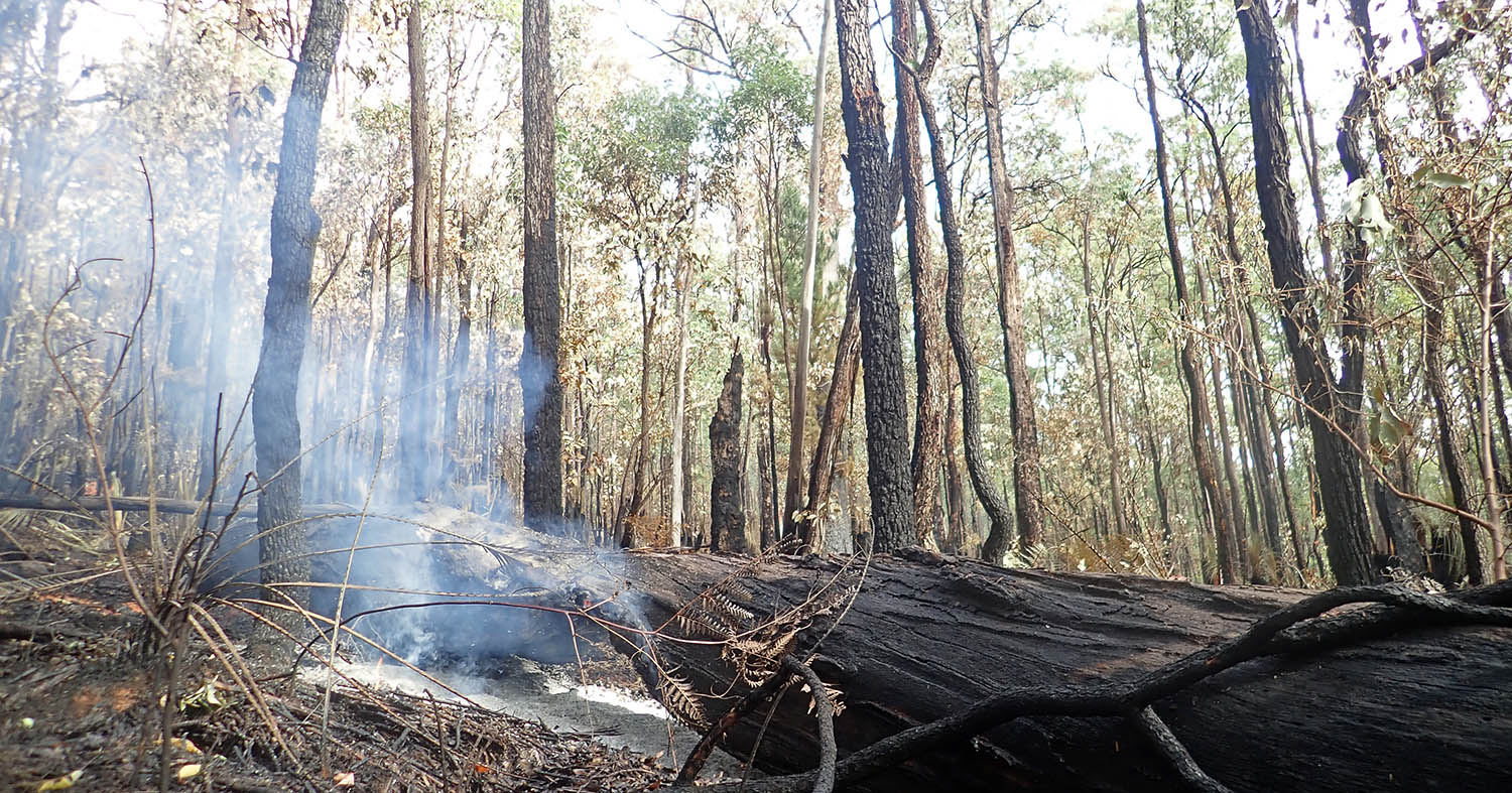 a still smoking log after a managed fire burn (image by Damon Ramsey)