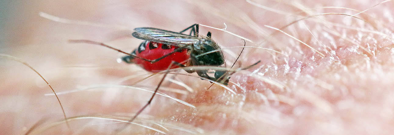 The author getting bitten by a mosquito that is filling up my blood (image by Damon Ramsey)