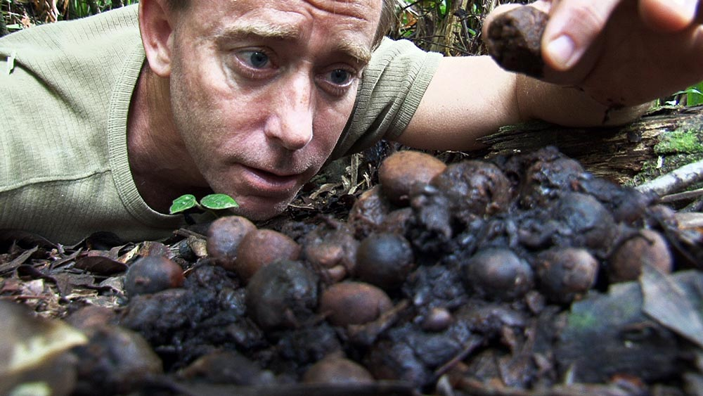 Damon Ramsey with cassowary dung, filming documentary in the rainforest (www.ecosystem-guides.com)