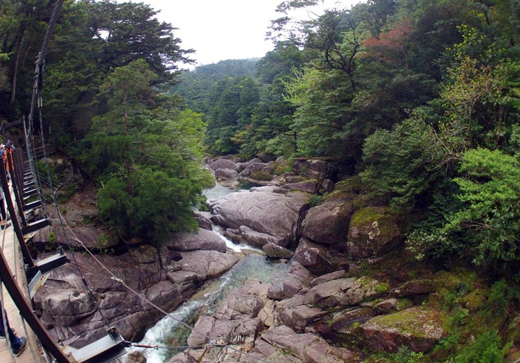 -- View from bridge of river, Yakushima Island, (image by Damon Ramsey, www.ecosystem-guides.com)